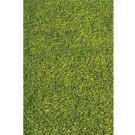 Shaggy Green Rug